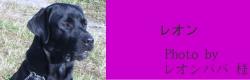 レオン|HAU ビヨルキス、北欧犬グッズ通販