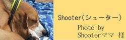 Shooter(シューター)|ビヨルキス ハーフチョークカラー BJORKIS|HAU ビヨルキス、北欧犬グッズ通販
