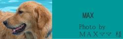 MAX|ビヨルキス ハーフチョークカラー BJORKIS|HAU ビヨルキス、北欧犬グッズ通販