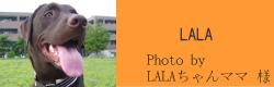 LALA|ビヨルキス ハーフチョークカラー BJORKIS|HAU ビヨルキス、北欧犬グッズ通販