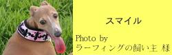 スマイル|フィンランドハンドメイドカラー フリース付き(フルール・ド・リス)|HAU ビヨルキス、北欧犬グッズ通販