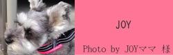 JOY|ビヨルキス ハーフチョークカラー BJORKIS|犬グッズ通販HAU