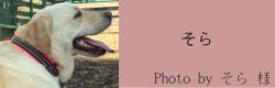 そら|ビヨルキス ハーフチョークカラー BJORKIS|HAU ビヨルキス、北欧犬グッズ通販