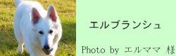 エルブランシュ|リフレクティブロングリード15m PAW of Sweden |HAU ビヨルキス、北欧犬グッズ通販