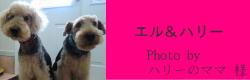 エル&ハリー|ビヨルキス ロゴハーフチョークカラー BJORKIS|HAU ビヨルキス、北欧犬グッズ通販