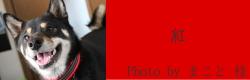 紅|ビヨルキス ハーフチョークカラー、ハーネス BJORKIS|犬グッズ通販HAU