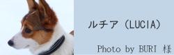 ルチア(LUCIA)|ビヨルキス ハーフチョークカラー BJORKIS|HAU ビヨルキス、北欧犬グッズ通販