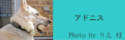 アドニス|HAU ビヨルキス、北欧犬グッズ通販