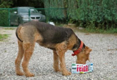 犬用携帯食器 bowl dogが人気!|犬グッズ通販 HAU|ハンディフードボウル
