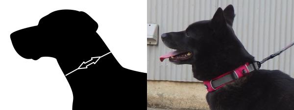 首輪測定部位||ドッグコペンハーゲン|犬グッズ通販HAU