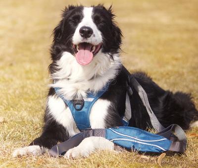 おすすめの犬用リード|ドッグコペンハーゲン アーバントレイルリーシュ|犬グッズ通販HAU