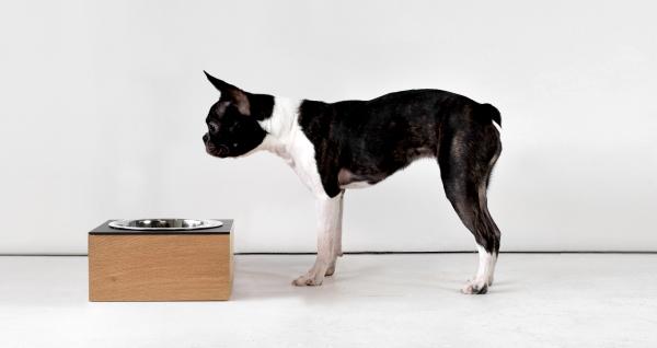 「スモーガスボード」は、アメリカ人家具デザイナーLuke Wongによるデザインの犬用食器セット|犬グッズ,犬用品通販HAU