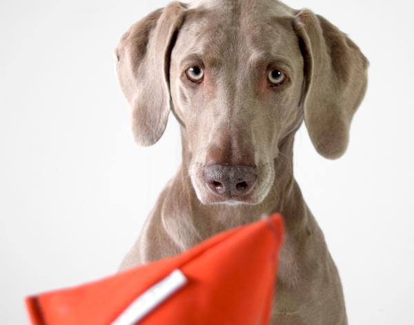A-OKトイ|Doca Pet (ドカペット) ハンドクラフト犬用おもちゃ/ドッグトイ|犬グッズ通販HAU