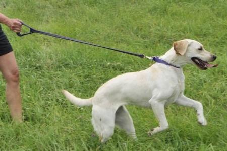 犬のお散歩用伸びるリード(防水・伸縮タイプ)|パーフェクトリーシュ