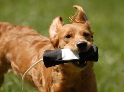 犬のおもちゃ(ドッグトイ)/トレーニングダミー MYSTIQUE スナックダミー おやつで簡単に訓練できます