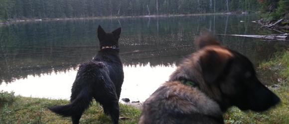 アウトドア犬グッズブランドTUENNE(ツーエヌ)|アメリカ直輸入犬用品