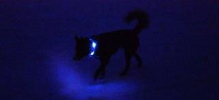 100m先でも視認可能な強い光|犬の交通安全ライト、光る首輪|LEDドッグカラー LEUCHTIE Mini(小型犬用セーフティーライト)