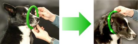 装着方法・使い方|犬の交通安全ライト、光る首輪|LED LEUCHTIE PRO(犬用セーフティーライト)|犬グッズ通販HAU