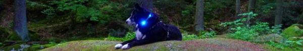犬の交通安全ライト、夜のお散歩に|LEDドッグカラー光る首輪 LEUCHTIE Plus(犬用ライト)|犬グッズ通販HAU