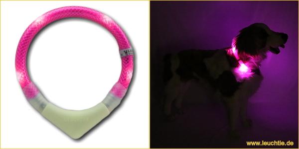 ホットピンク|犬の交通安全ライト、光る首輪|LEDドッグカラー LEUCHTIE Plus (犬用セーフティーライト)|犬グッズ通販HAU