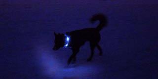 100m先でも視認可能な強い光|犬の交通安全ライト、光る首輪|LEDドッグカラー LEUCHTIE PRO(犬用セーフティーライト)
