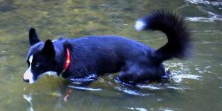 高い防水性・耐水性で海・川で泳げる|犬の交通安全ライト、光る首輪|LEDドッグカラー LEUCHTIE PRO