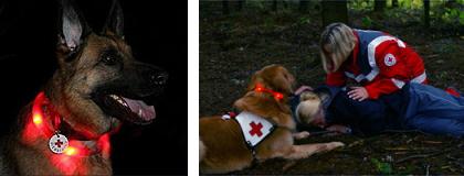 レスキュー犬、警察犬、夜間のハンティングゲームで使用|犬の交通安全ライト、光る首輪|LEUCHTIE PRO|犬グッズ通販HAU