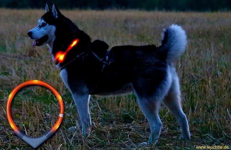 夜のお散歩におすすめ!|犬のライトLEUCHTIEとは?|犬グッズ通販HAU