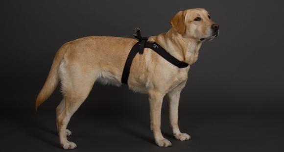 中型犬・大型犬用ハーネス|Sporza Tre Ponti トレ・ポンティ|犬グッズ通販HAU