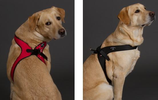脇がこすれにくいおすすめ中・大型犬用ハーネス|Sporza Tre Ponti|犬グッズ通販HAU