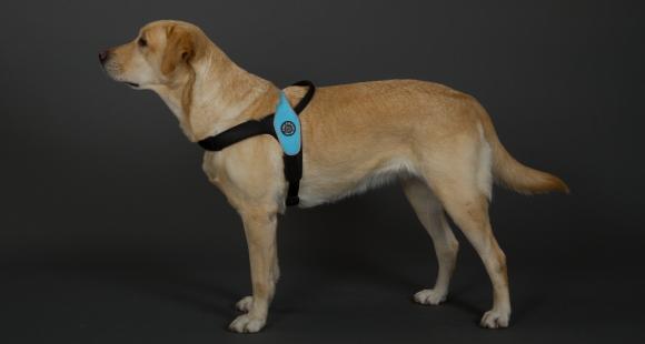 K9タイプ、ポリス・警察犬型中型犬・大型犬用ハーネス|Primo Tre Ponti トレ・ポンティ|犬グッズ通販HAU