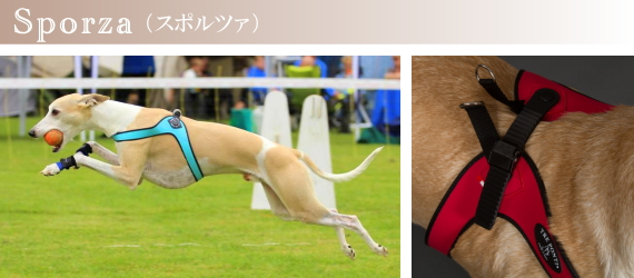 Tre Ponti(トレ・ポンティ)犬用ハーネス《Sporza》の特徴|犬グッズ通販HAU